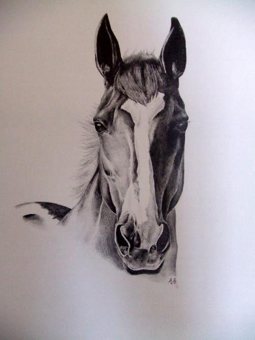 Bien faire du cheval page 5 - Tete de cheval dessin ...